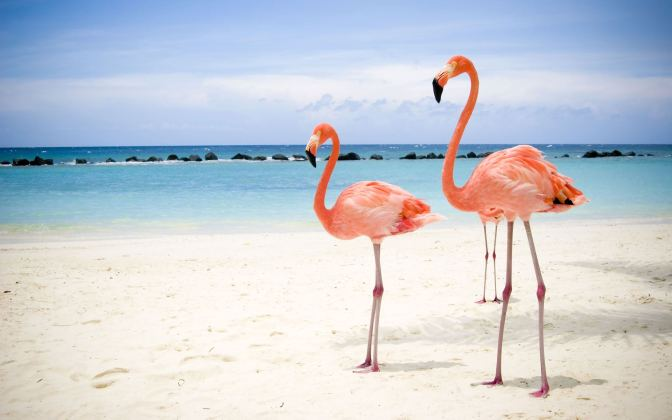 Flamingos Vacation